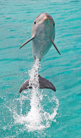 dolphin mauritius